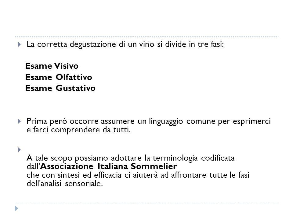  La corretta degustazione di un vino si divide in tre fasi: Esame Visivo Esame Olfattivo Esame Gustativo  Prima però occorre assumere un linguaggio