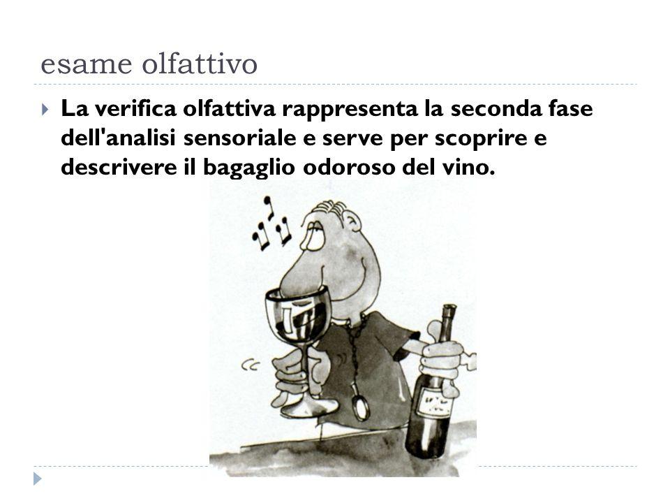 esame olfattivo  La verifica olfattiva rappresenta la seconda fase dell analisi sensoriale e serve per scoprire e descrivere il bagaglio odoroso del vino.