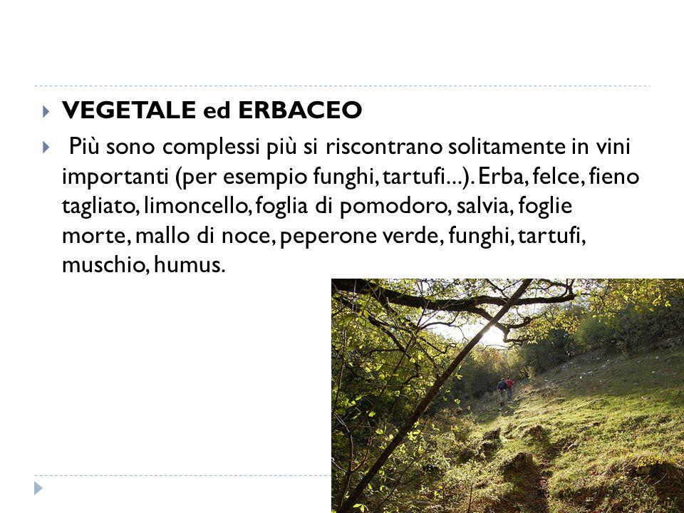  VEGETALE ed ERBACEO  Più sono complessi più si riscontrano solitamente in vini importanti (per esempio funghi, tartufi...).