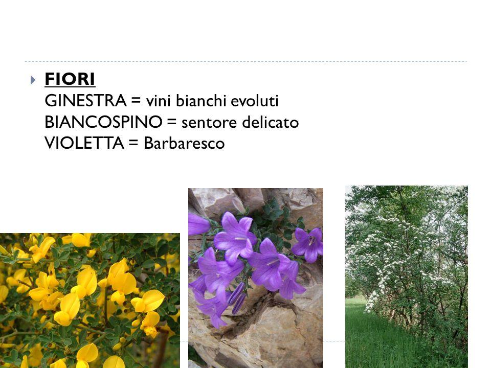  FIORI GINESTRA = vini bianchi evoluti BIANCOSPINO = sentore delicato VIOLETTA = Barbaresco