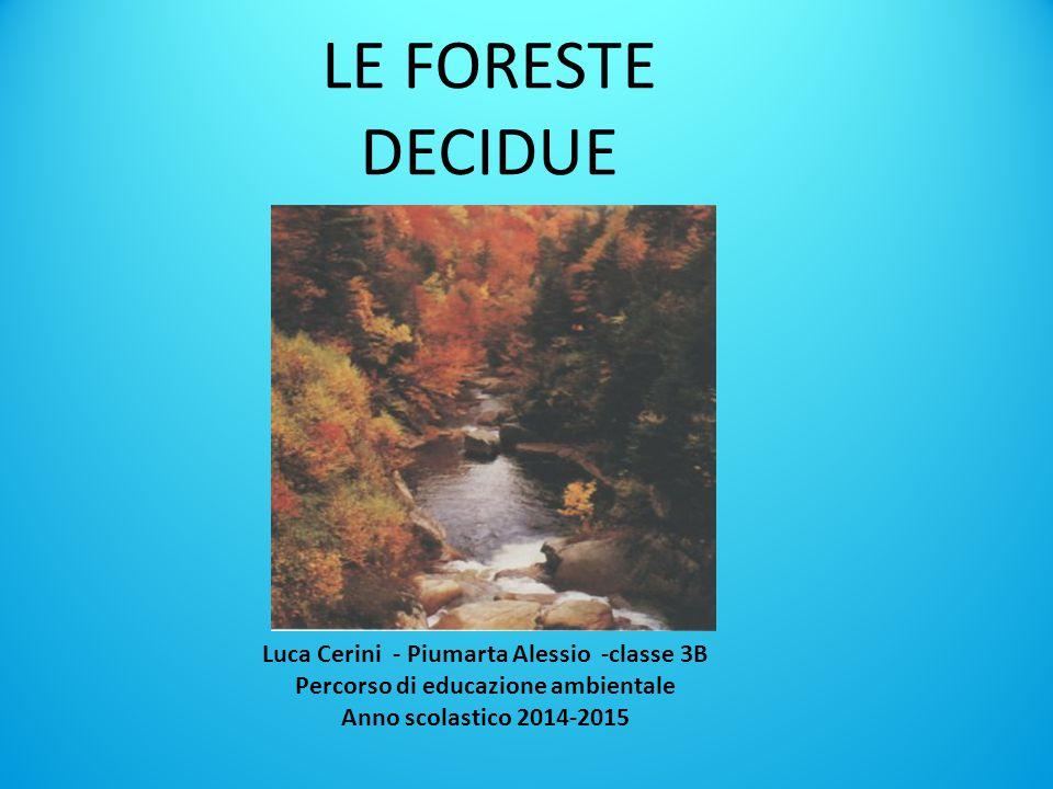 LE FORESTE DECIDUE Luca Cerini - Piumarta Alessio -classe 3B Percorso di educazione ambientale Anno scolastico 2014-2015