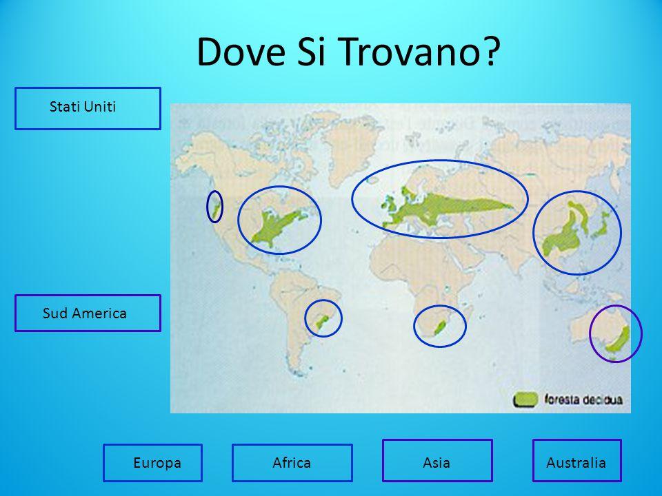 Dove Si Trovano? Stati Uniti Africa Sud America EuropaAsia Australia