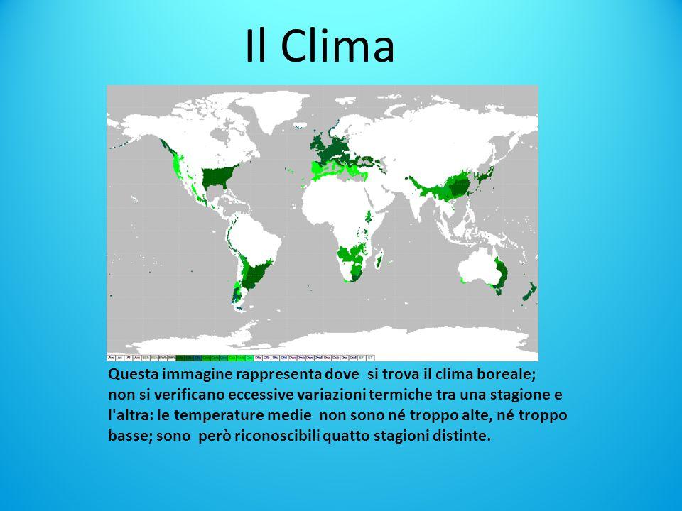 Il Clima Questa immagine rappresenta dove si trova il clima boreale; non si verificano eccessive variazioni termiche tra una stagione e l altra: le temperature medie non sono né troppo alte, né troppo basse; sono però riconoscibili quatto stagioni distinte.