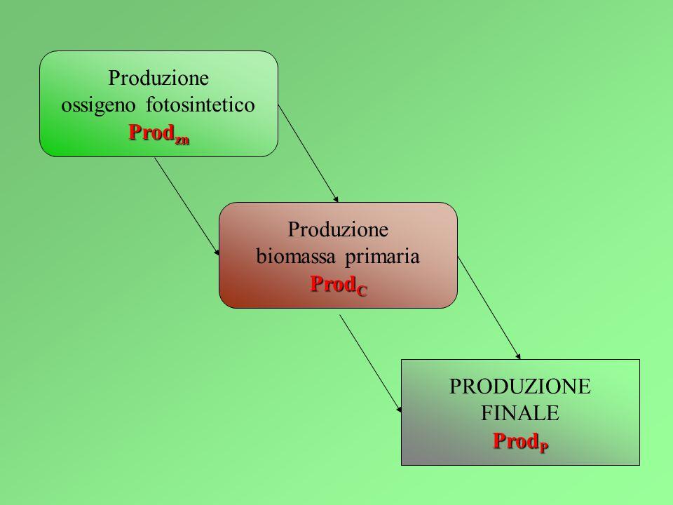 Produzione ossigeno fotosintetico Prod zn Produzione biomassa primaria Prod C PRODUZIONE FINALE Prod P