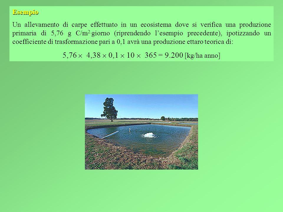 Esempio Un allevamento di carpe effettuato in un ecosistema dove si verifica una produzione primaria di 5,76 g C/m 2.