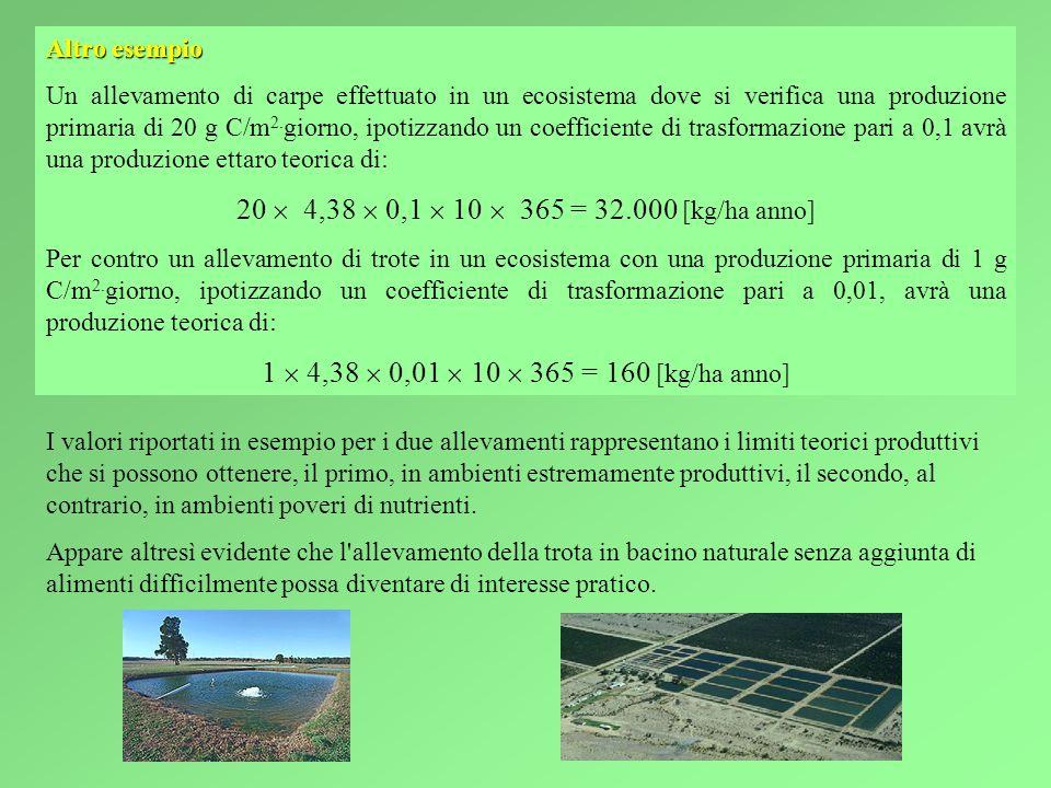 Altro esempio Un allevamento di carpe effettuato in un ecosistema dove si verifica una produzione primaria di 20 g C/m 2.