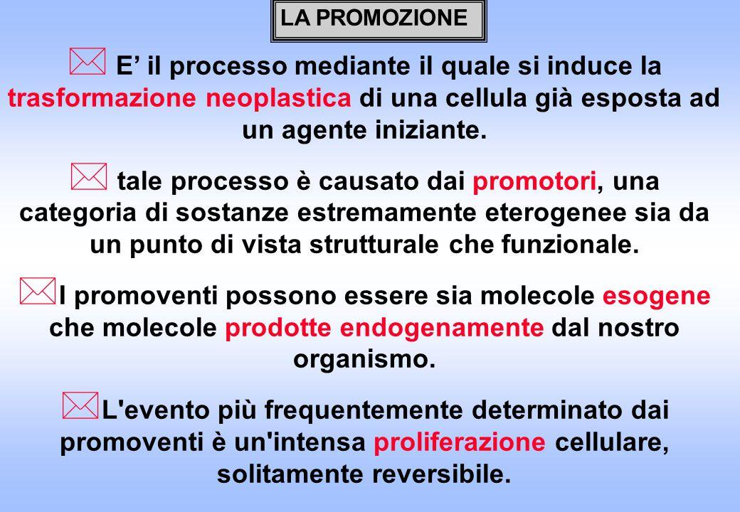 LA PROMOZIONE * E' il processo mediante il quale si induce la trasformazione neoplastica di una cellula già esposta ad un agente iniziante. * tale pro