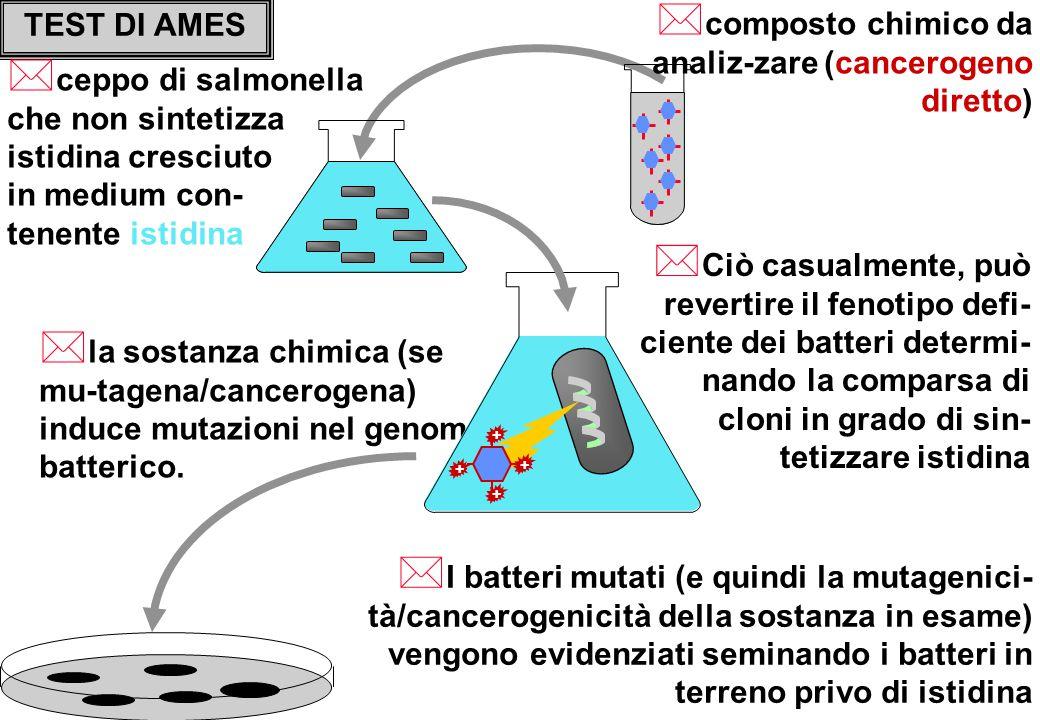 TEST DI AMES * ceppo di salmonella che non sintetizza istidina cresciuto in medium con- tenente istidina * composto chimico da analiz-zare (cancerogeno diretto) * I batteri mutati (e quindi la mutagenici- tà/cancerogenicità della sostanza in esame) vengono evidenziati seminando i batteri in terreno privo di istidina * la sostanza chimica (se mu-tagena/cancerogena) induce mutazioni nel genoma batterico.