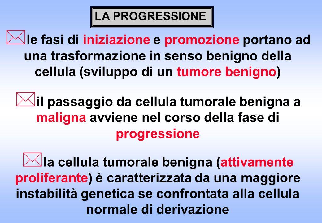 * le fasi di iniziazione e promozione portano ad una trasformazione in senso benigno della cellula (sviluppo di un tumore benigno) * il passaggio da c