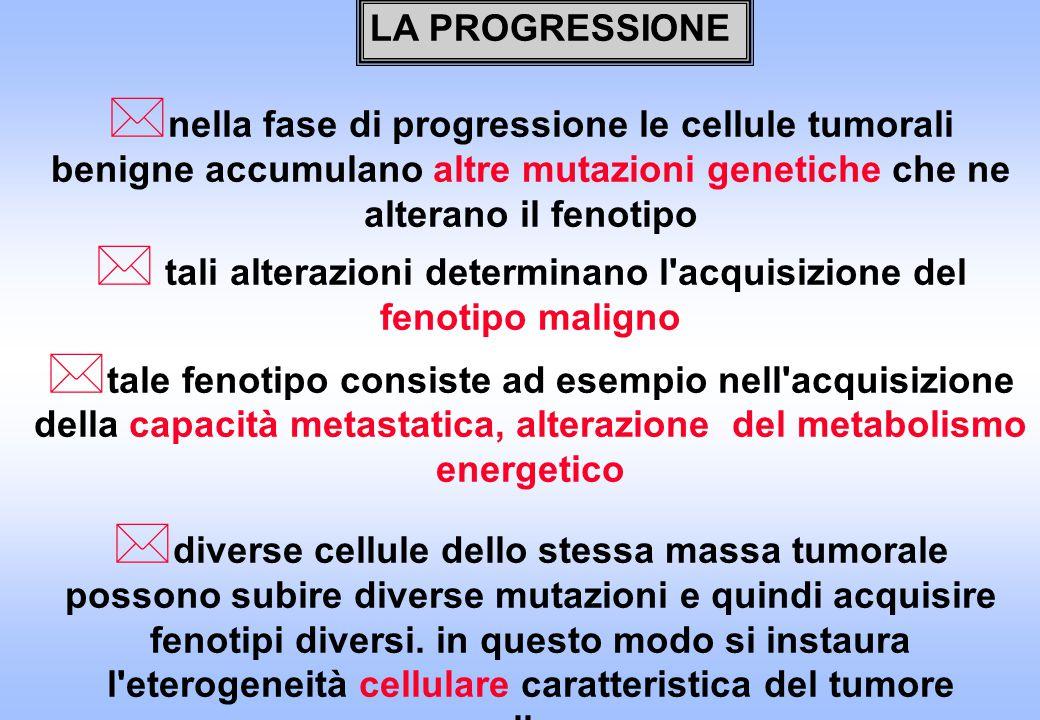 * nella fase di progressione le cellule tumorali benigne accumulano altre mutazioni genetiche che ne alterano il fenotipo * tali alterazioni determina