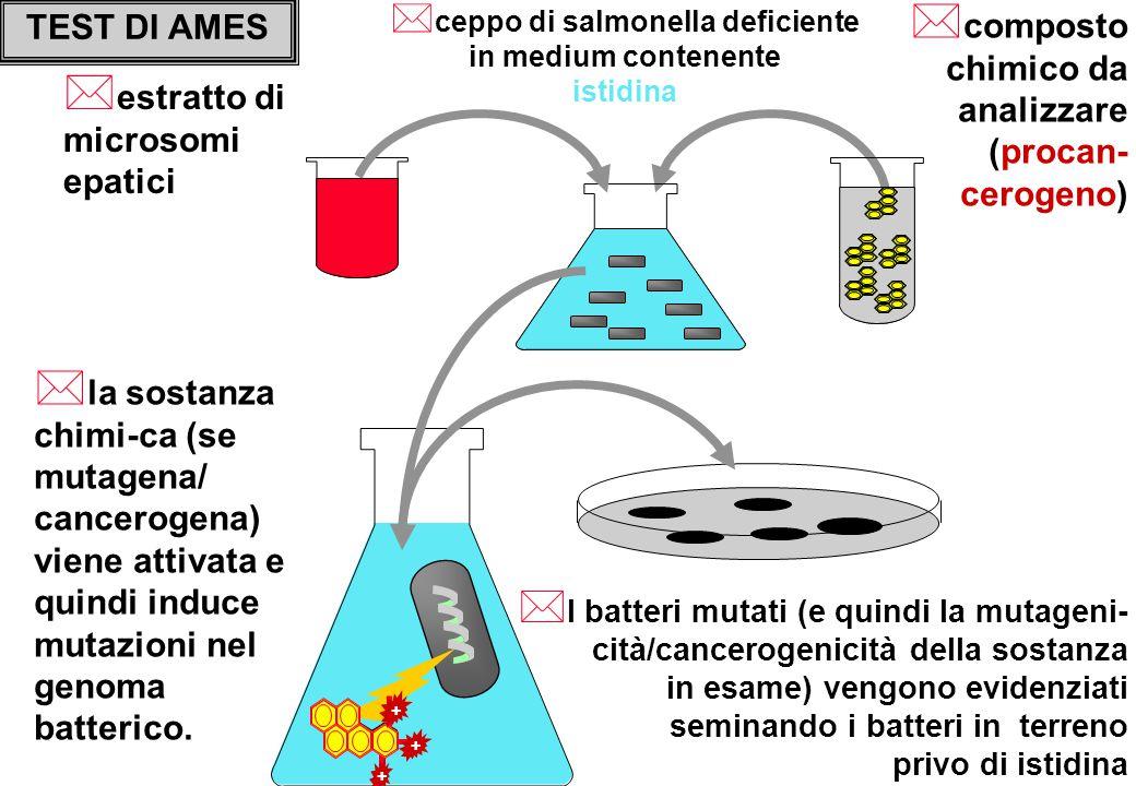 TEST DI AMES * ceppo di salmonella deficiente in medium contenente istidina * composto chimico da analizzare (procan- cerogeno) * I batteri mutati (e quindi la mutageni- cità/cancerogenicità della sostanza in esame) vengono evidenziati seminando i batteri in terreno privo di istidina * la sostanza chimi-ca (se mutagena/ cancerogena) viene attivata e quindi induce mutazioni nel genoma batterico.