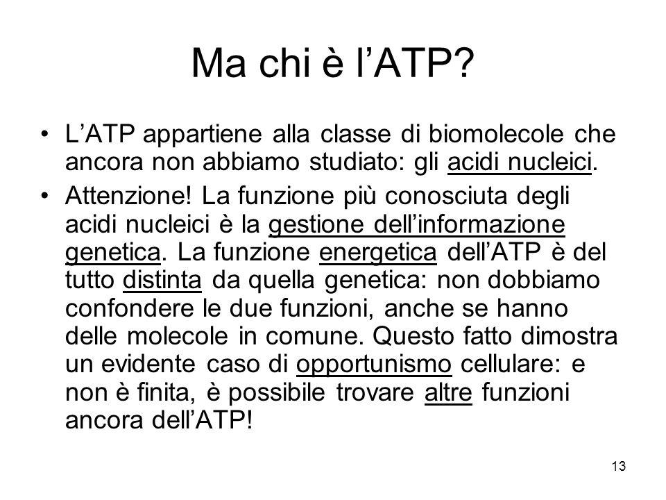 13 Ma chi è l'ATP? L'ATP appartiene alla classe di biomolecole che ancora non abbiamo studiato: gli acidi nucleici. Attenzione! La funzione più conosc