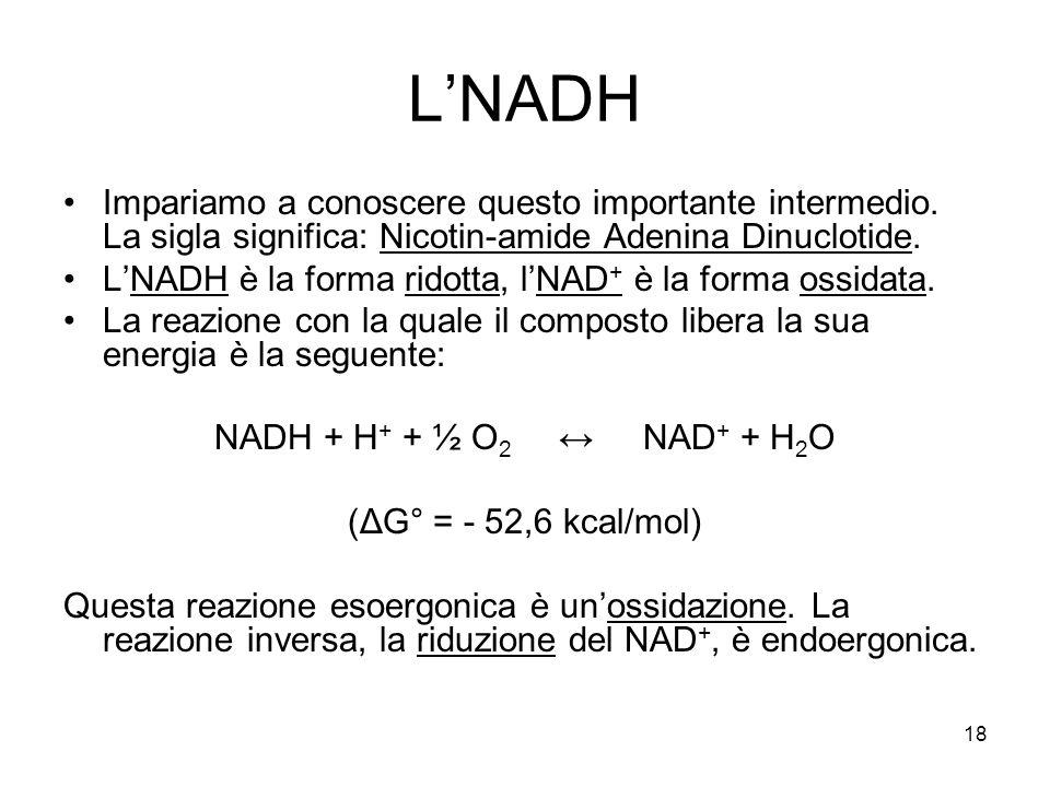 18 L'NADH Impariamo a conoscere questo importante intermedio. La sigla significa: Nicotin-amide Adenina Dinuclotide. L'NADH è la forma ridotta, l'NAD