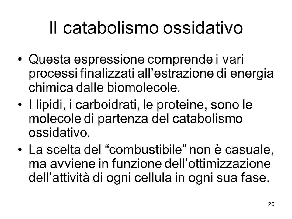 20 Il catabolismo ossidativo Questa espressione comprende i vari processi finalizzati all'estrazione di energia chimica dalle biomolecole. I lipidi, i