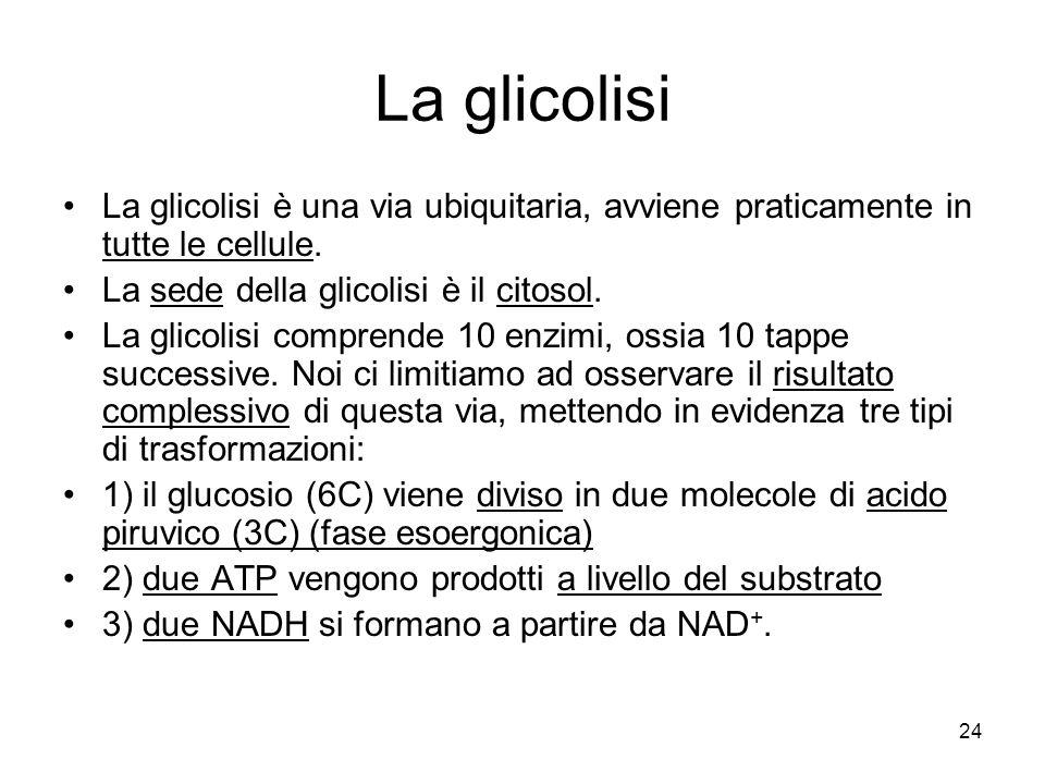 24 La glicolisi La glicolisi è una via ubiquitaria, avviene praticamente in tutte le cellule. La sede della glicolisi è il citosol. La glicolisi compr