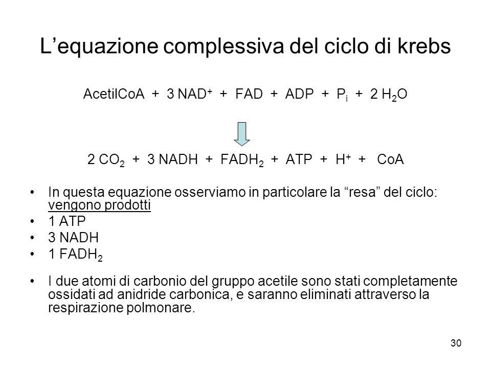 30 L'equazione complessiva del ciclo di krebs AcetilCoA + 3 NAD + + FAD + ADP + P i + 2 H 2 O 2 CO 2 + 3 NADH + FADH 2 + ATP + H + + CoA In questa equ