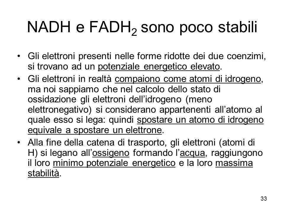 33 NADH e FADH 2 sono poco stabili Gli elettroni presenti nelle forme ridotte dei due coenzimi, si trovano ad un potenziale energetico elevato. Gli el