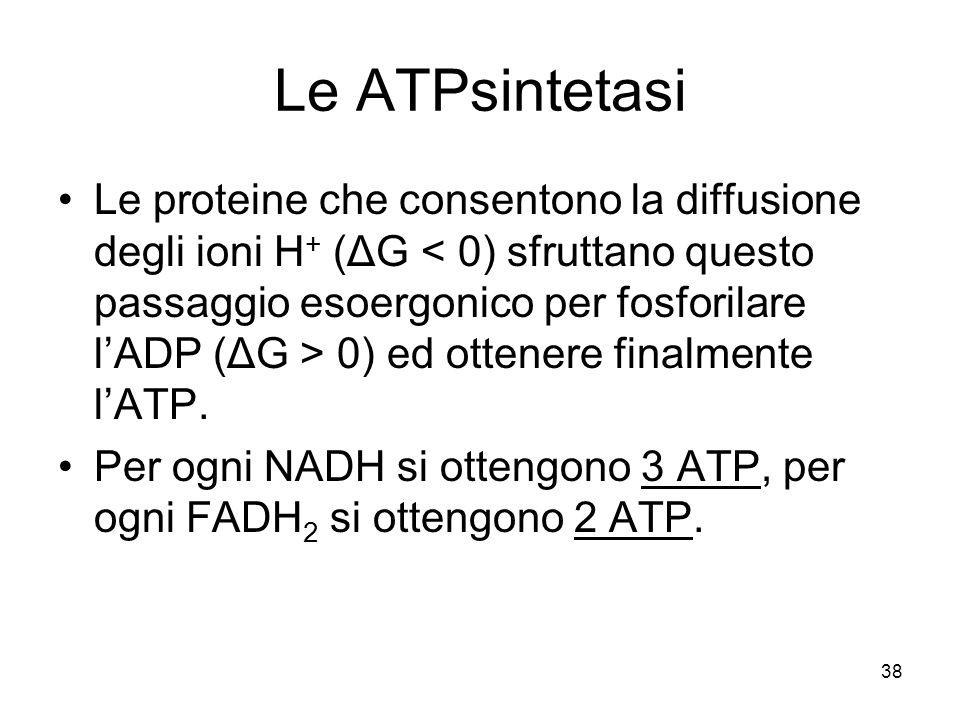 38 Le ATPsintetasi Le proteine che consentono la diffusione degli ioni H + (ΔG 0) ed ottenere finalmente l'ATP. Per ogni NADH si ottengono 3 ATP, per