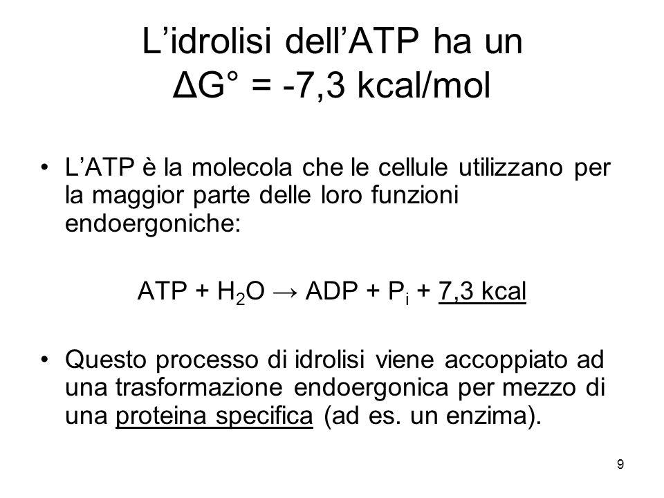 9 L'idrolisi dell'ATP ha un ΔG° = -7,3 kcal/mol L'ATP è la molecola che le cellule utilizzano per la maggior parte delle loro funzioni endoergoniche: