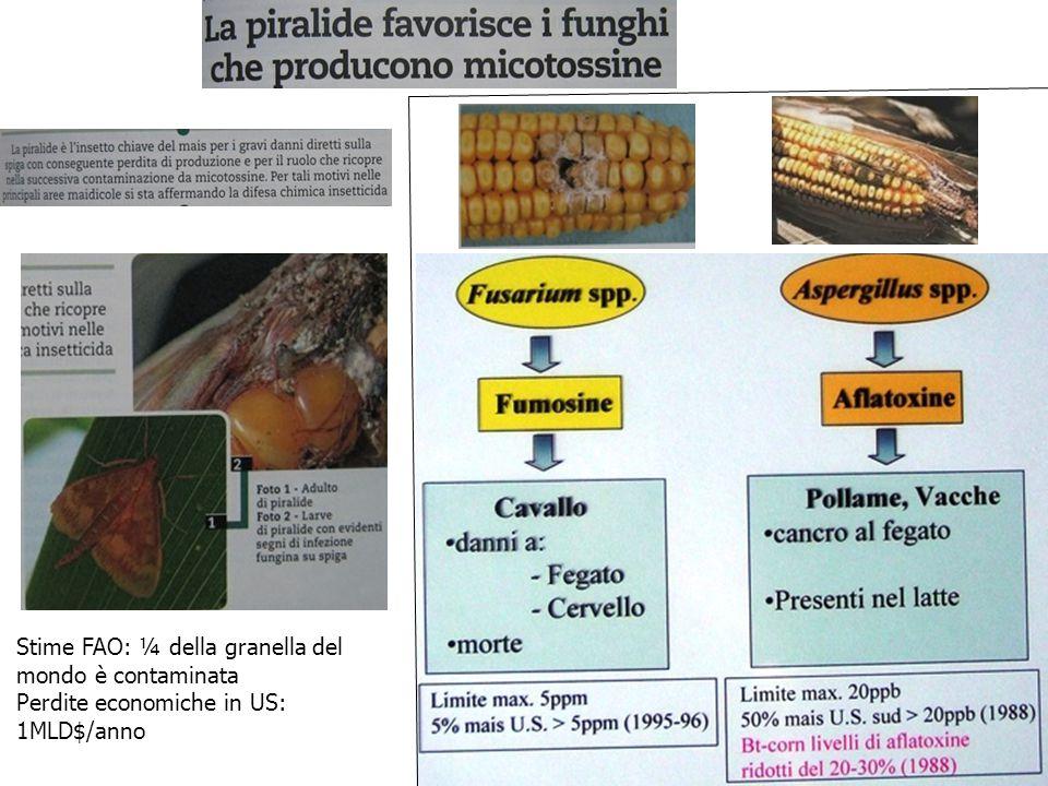 Stime FAO: ¼ della granella del mondo è contaminata Perdite economiche in US: 1MLD$/anno