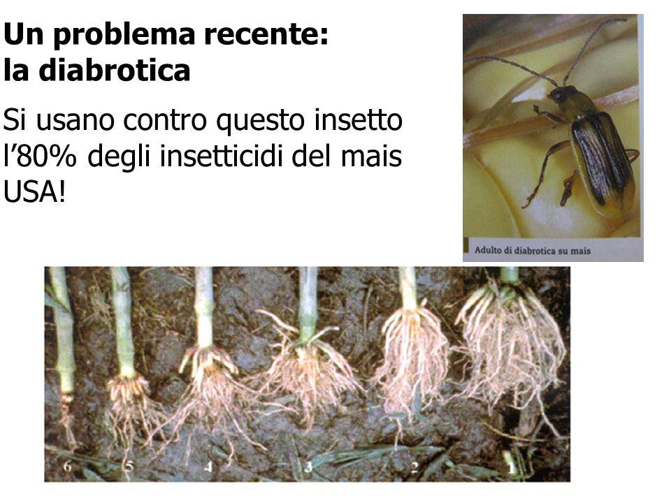 Un problema recente: la diabrotica Si usano contro questo insetto l'80% degli insetticidi del mais USA!
