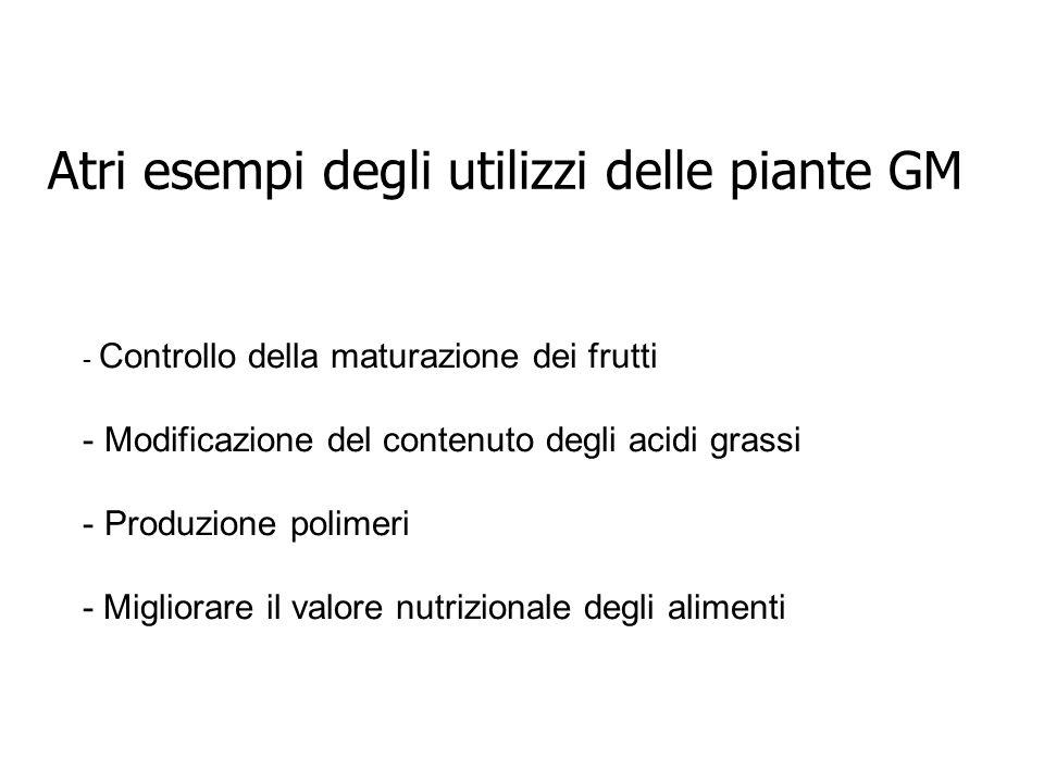 Atri esempi degli utilizzi delle piante GM - Controllo della maturazione dei frutti - Modificazione del contenuto degli acidi grassi - Produzione poli