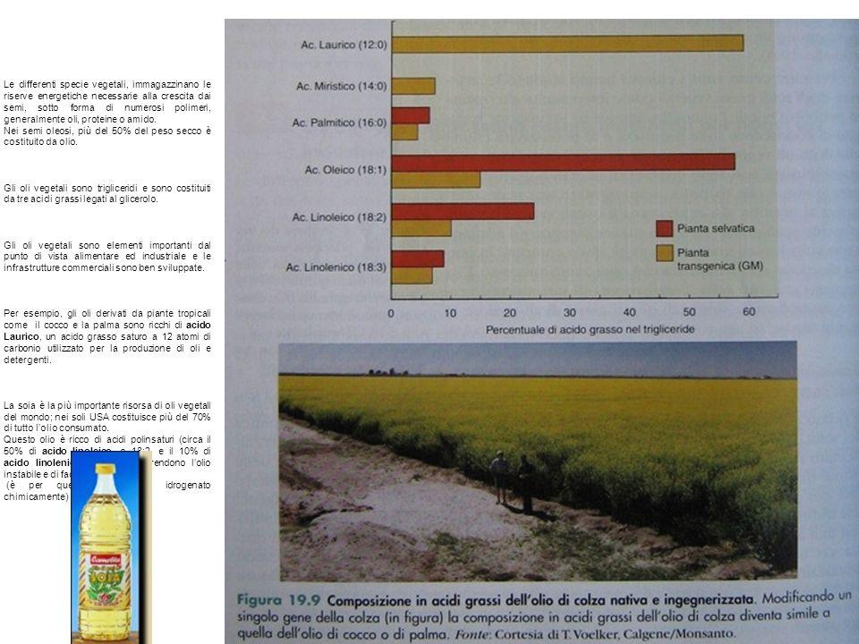 Le differenti specie vegetali, immagazzinano le riserve energetiche necessarie alla crescita dai semi, sotto forma di numerosi polimeri, generalmente