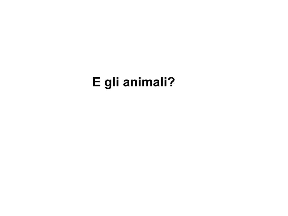 E gli animali?