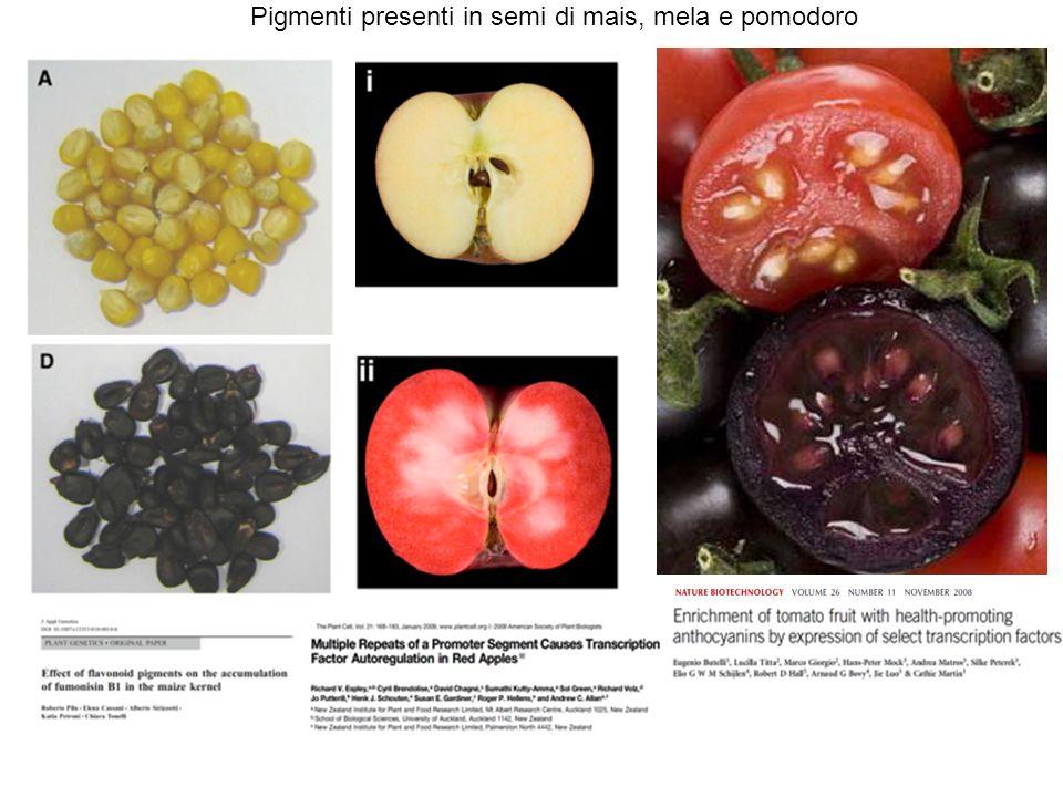 Pigmenti presenti in semi di mais, mela e pomodoro