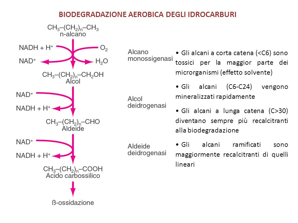 Gli alcani a corta catena (<C6) sono tossici per la maggior parte dei microrganismi (effetto solvente) Gli alcani (C6-C24) vengono mineralizzati rapidamente Gli alcani a lunga catena (C>30) diventano sempre più recalcitranti alla biodegradazione Gli alcani ramificati sono maggiormente recalcitranti di quelli lineari