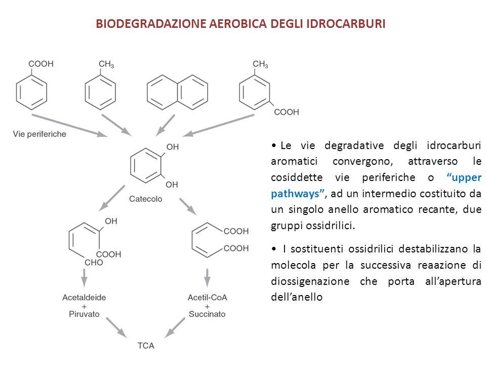 BIODEGRADAZIONE AEROBICA DEGLI IDROCARBURI Le vie degradative degli idrocarburi aromatici convergono, attraverso le cosiddette vie periferiche o upper pathways , ad un intermedio costituito da un singolo anello aromatico recante, due gruppi ossidrilici.