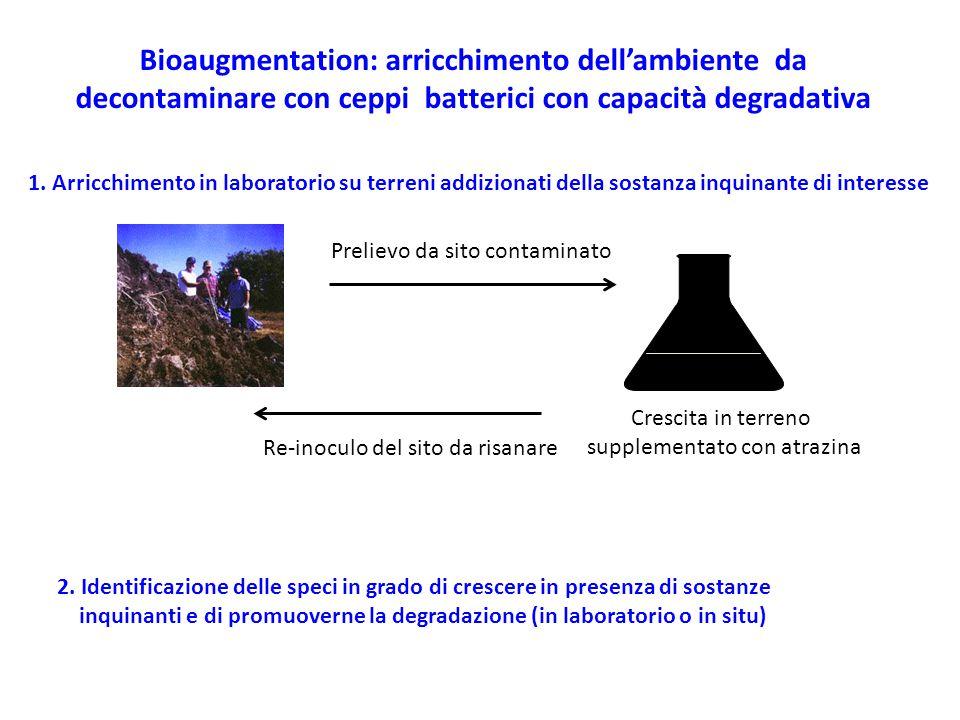 Bioaugmentation: arricchimento dell'ambiente da decontaminare con ceppi batterici con capacità degradativa 1. Arricchimento in laboratorio su terreni