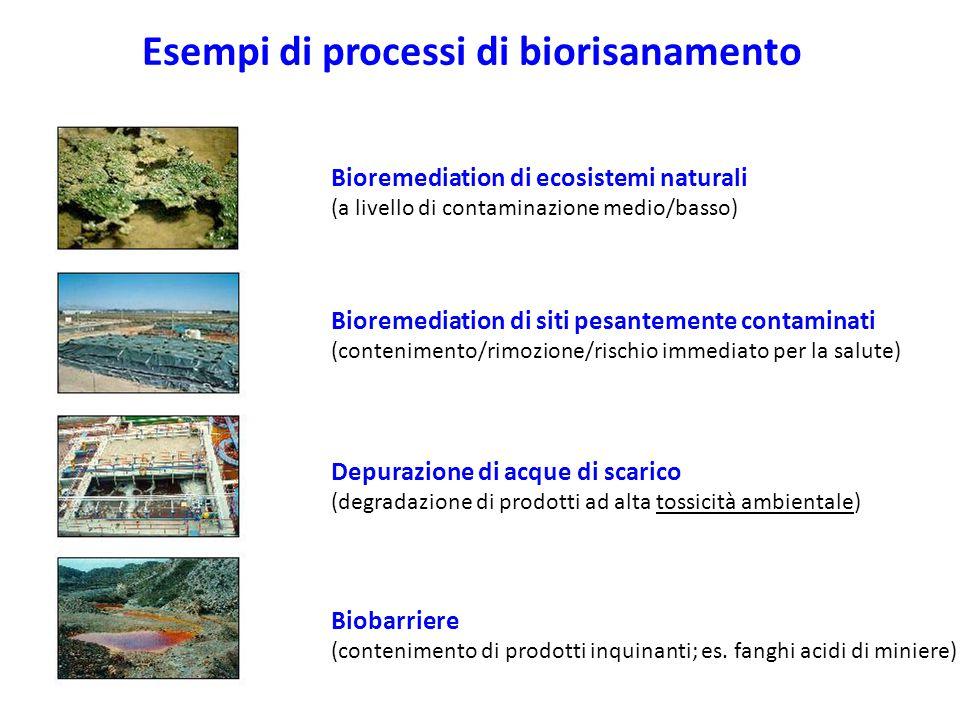 Esempi di processi di biorisanamento Bioremediation di ecosistemi naturali (a livello di contaminazione medio/basso) Bioremediation di siti pesantemente contaminati (contenimento/rimozione/rischio immediato per la salute) Depurazione di acque di scarico (degradazione di prodotti ad alta tossicità ambientale) Biobarriere (contenimento di prodotti inquinanti; es.