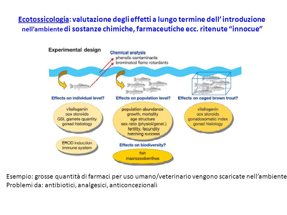 """Ecotossicologia: valutazione degli effetti a lungo termine dell' introduzione nell'ambiente di sostanze chimiche, farmaceutiche ecc. ritenute """"innocue"""
