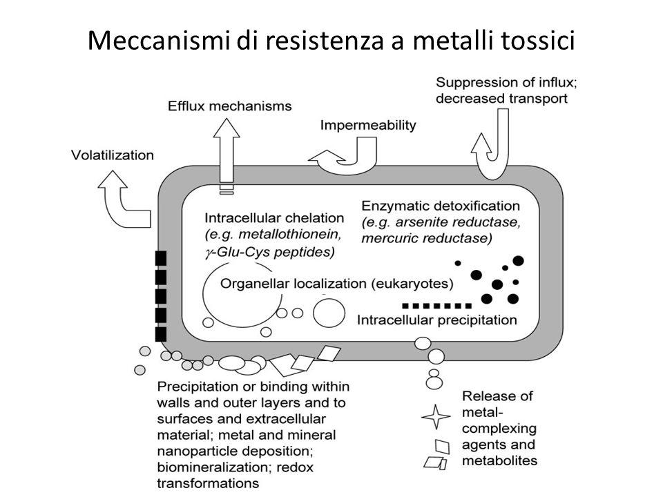 Meccanismi di resistenza a metalli tossici