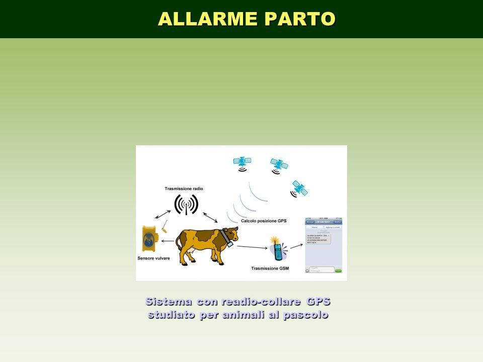 Sistema con readio-collare GPS studiato per animali al pascolo