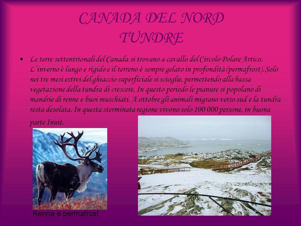 CANADA DEL NORD TUNDRE Le terre settentrionali del Canada si trovano a cavallo del Circolo Polare Artico. L'inverno è lungo e rigido e il terreno è se
