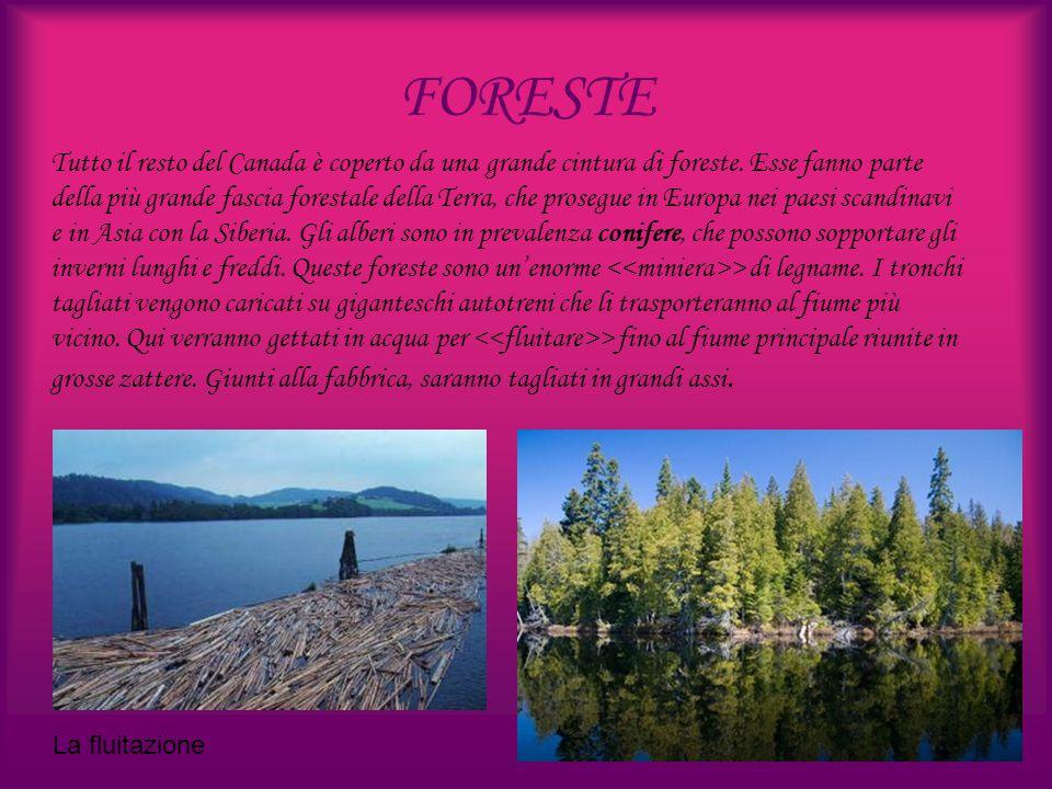 FORESTE Tutto il resto del Canada è coperto da una grande cintura di foreste. Esse fanno parte della più grande fascia forestale della Terra, che pros