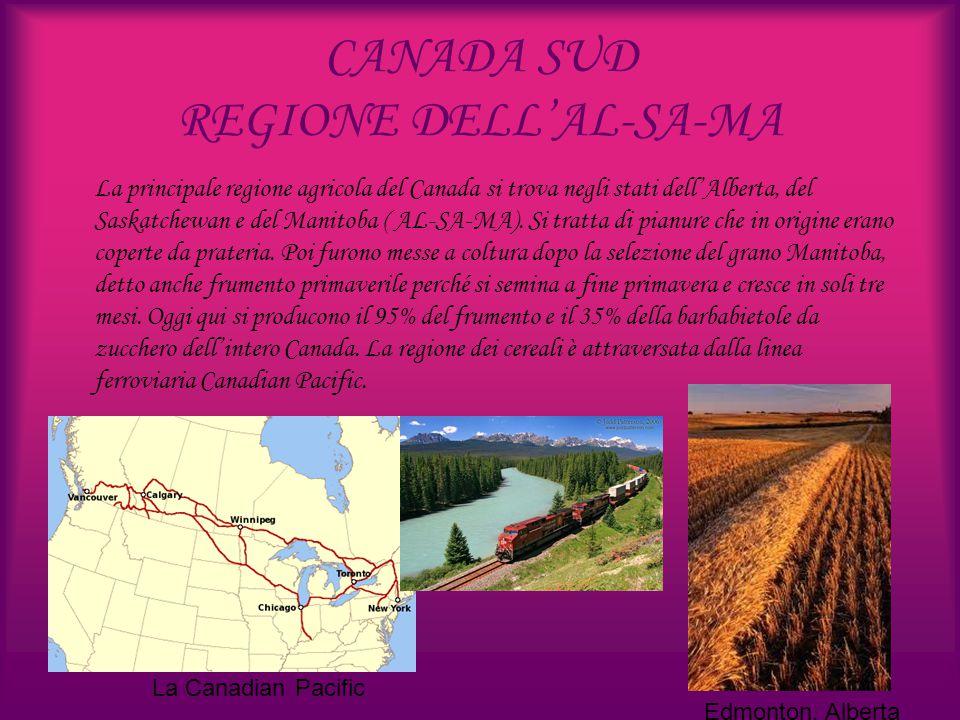 CANADA SUD REGIONE DELL'AL-SA-MA La principale regione agricola del Canada si trova negli stati dell'Alberta, del Saskatchewan e del Manitoba ( AL-SA-