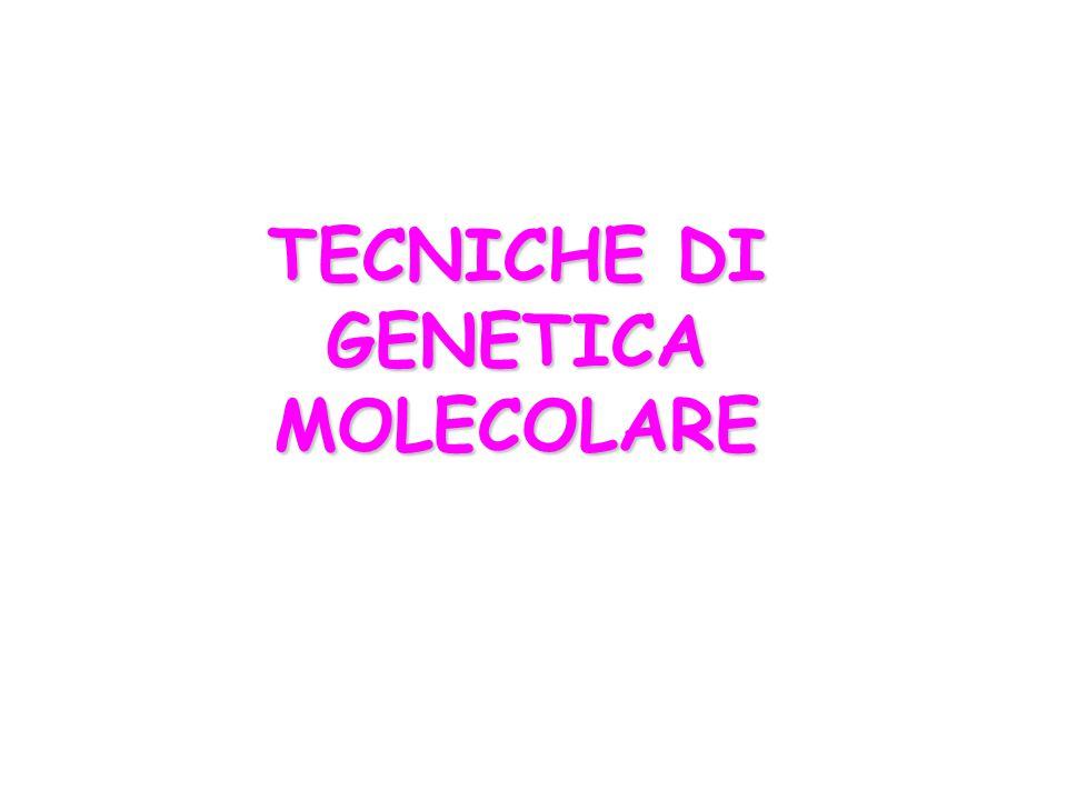 TECNICHE DI GENETICA MOLECOLARE