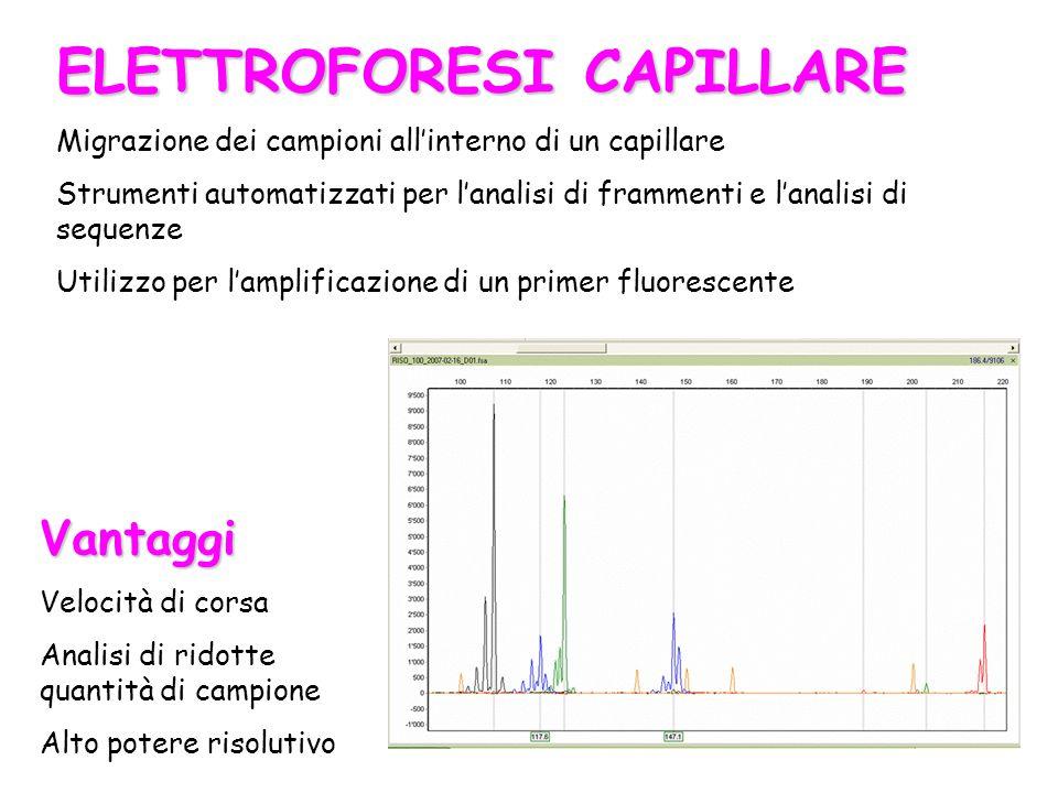 ELETTROFORESI CAPILLARE Migrazione dei campioni all'interno di un capillare Strumenti automatizzati per l'analisi di frammenti e l'analisi di sequenze
