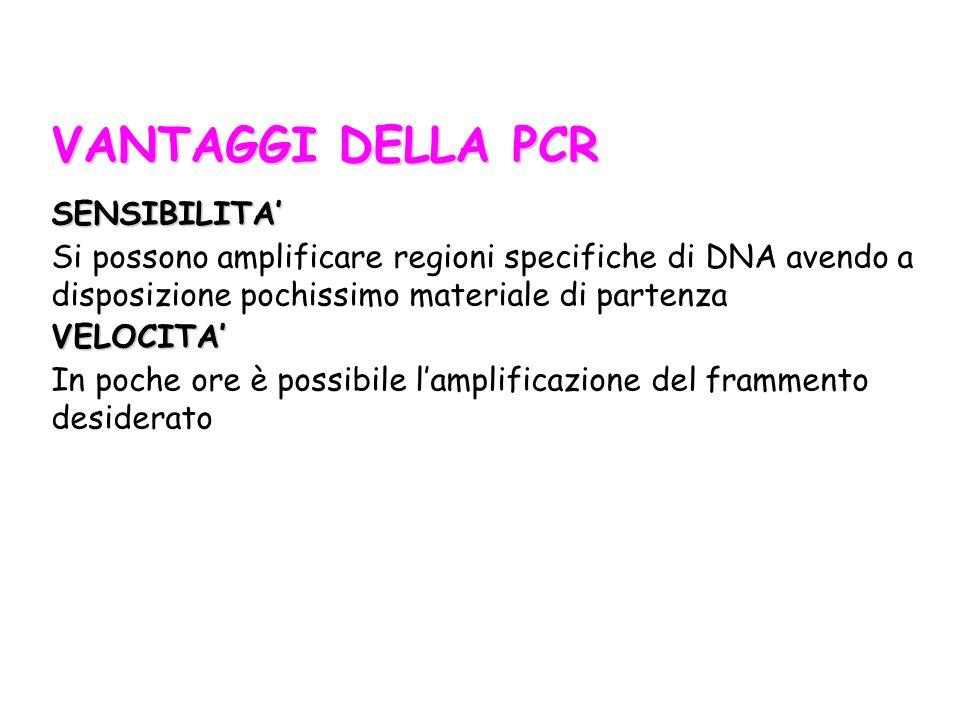 VANTAGGI DELLA PCR SENSIBILITA' Si possono amplificare regioni specifiche di DNA avendo a disposizione pochissimo materiale di partenzaVELOCITA' In po