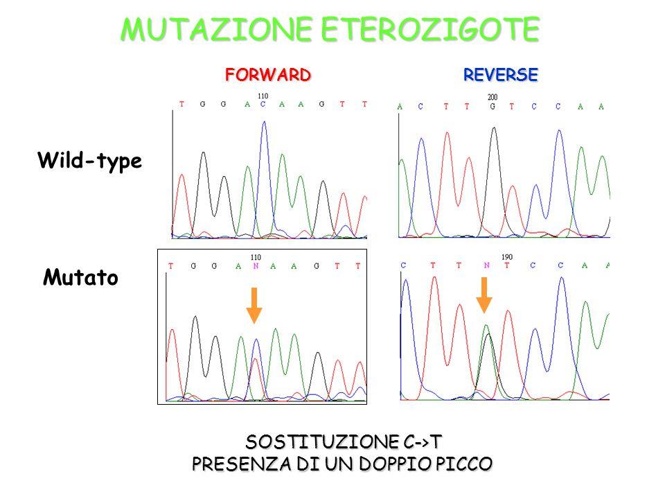 SOSTITUZIONE C->T PRESENZA DI UN DOPPIO PICCO Wild-type FORWARD REVERSE Mutato MUTAZIONE ETEROZIGOTE