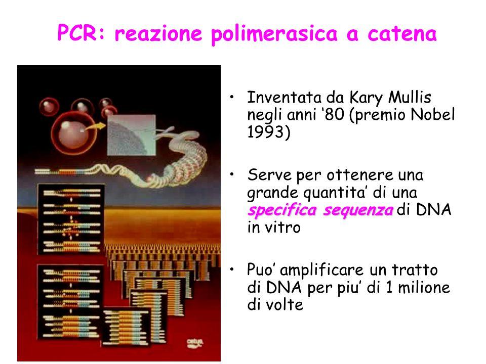 Inventata da Kary Mullis negli anni '80 (premio Nobel 1993) specifica sequenzaServe per ottenere una grande quantita' di una specifica sequenza di DNA