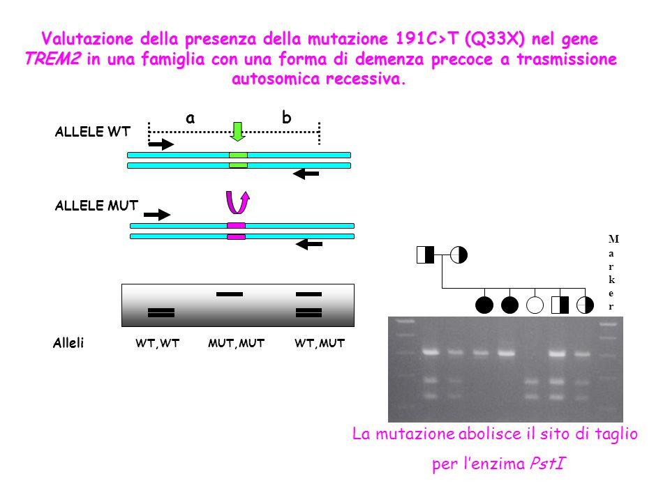 Alleli WT,WT MUT,MUT WT,MUT ALLELE WT ALLELE MUT ab Valutazione della presenza della mutazione 191C>T (Q33X) nel gene TREM2 in una famiglia con una fo