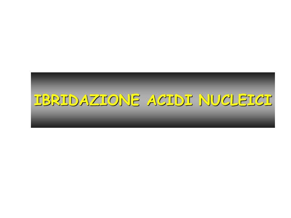 IBRIDAZIONE ACIDI NUCLEICI
