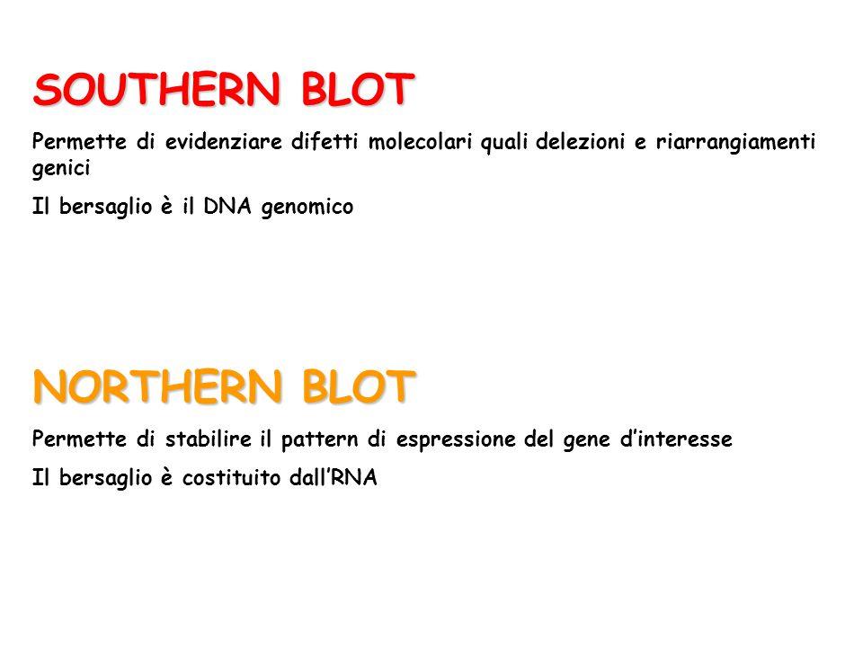 SOUTHERN BLOT Permette di evidenziare difetti molecolari quali delezioni e riarrangiamenti genici Il bersaglio è il DNA genomico NORTHERN BLOT Permett