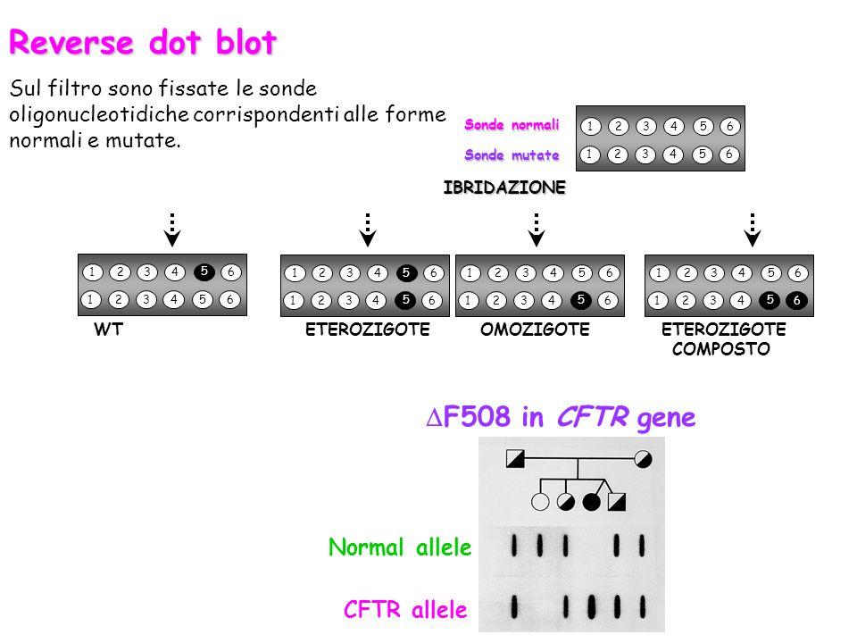 123456 123456 Sonde normali Sonde mutate IBRIDAZIONE 123456 5 123456 123456 123456 WT ETEROZIGOTE OMOZIGOTE ETEROZIGOTE COMPOSTO 5 5 123456 123456 5 1