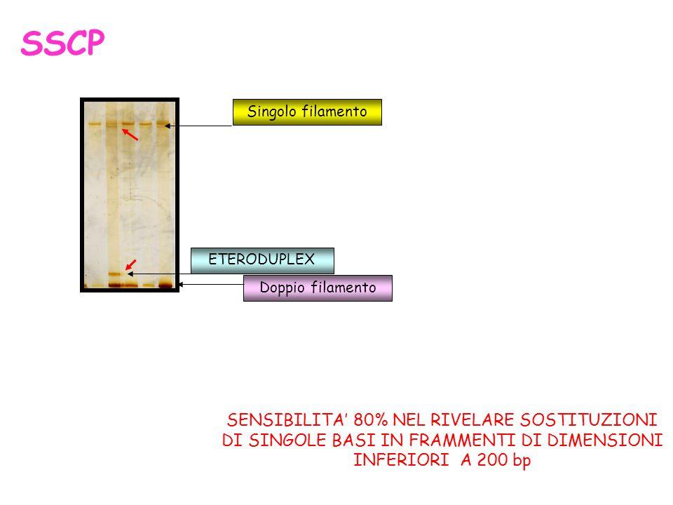 Singolo filamento ETERODUPLEX Doppio filamento SSCP SENSIBILITA' 80% NEL RIVELARE SOSTITUZIONI DI SINGOLE BASI IN FRAMMENTI DI DIMENSIONI INFERIORI A