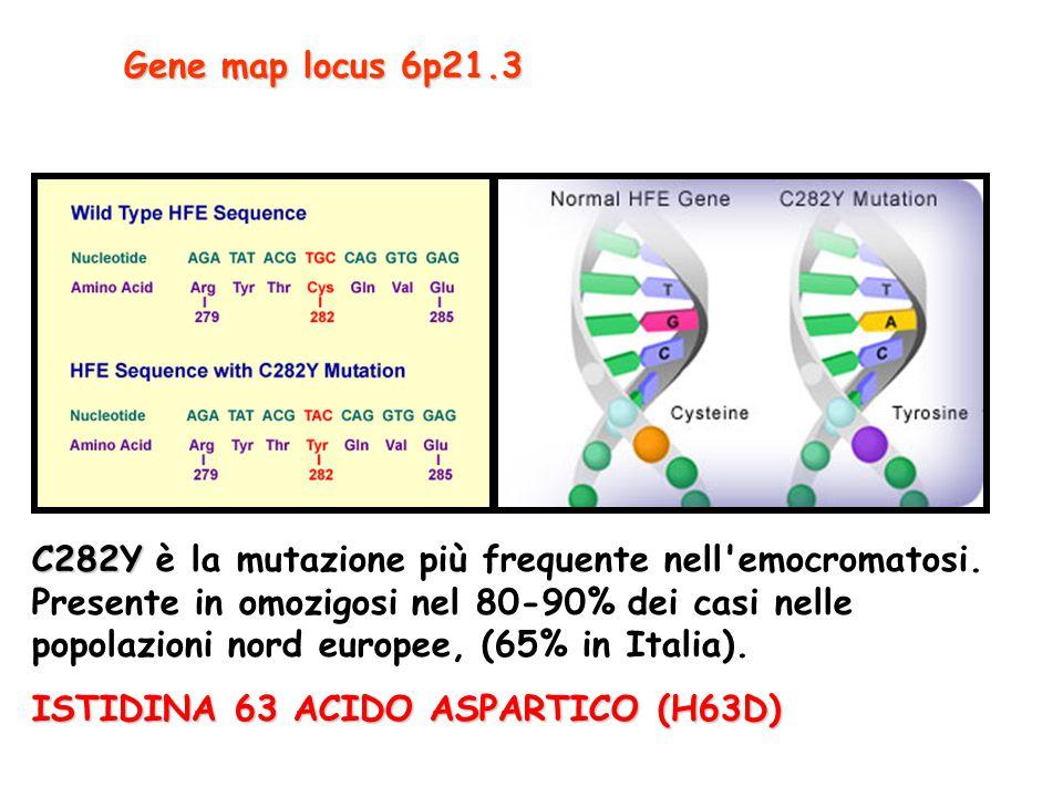 C282Y C282Y è la mutazione più frequente nell'emocromatosi. Presente in omozigosi nel 80-90% dei casi nelle popolazioni nord europee, (65% in Italia).